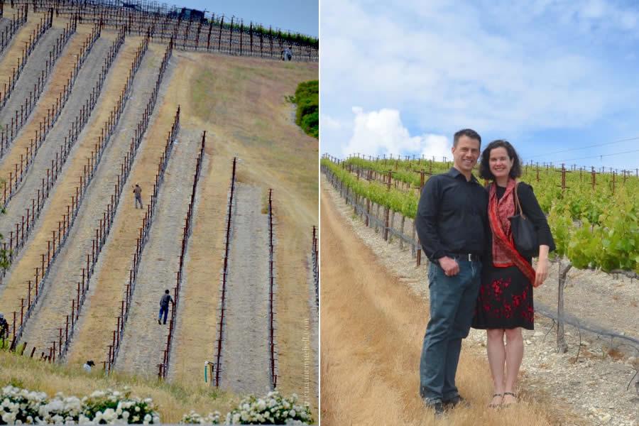 Niner Wine Estates Paso Robles Vineyards