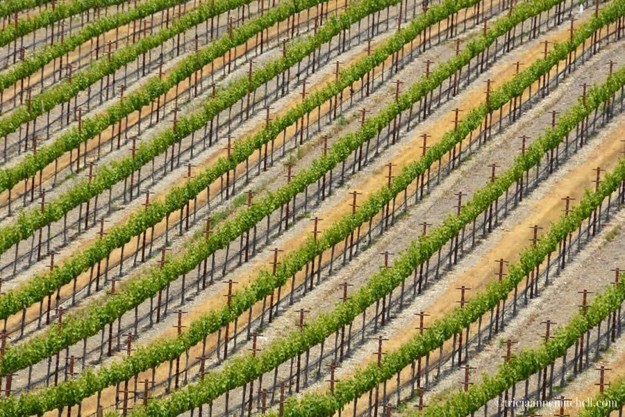 Paso Robles Vineyard 101 Wine Tour