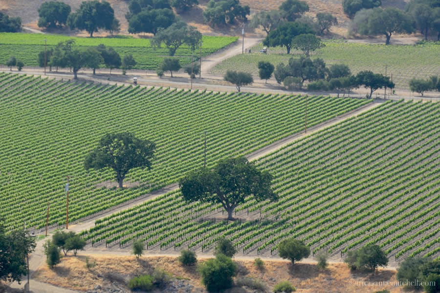 Santa Ynez Countryside