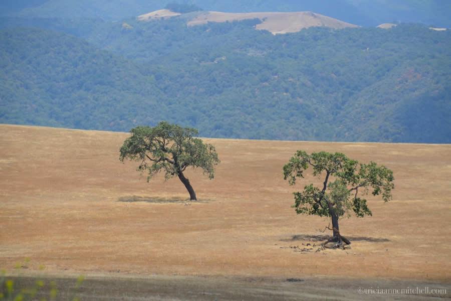 Santa Ynez Valley Countryside