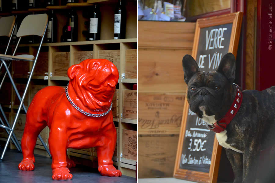 French Bulldog Saint-Emilion Wine Shop