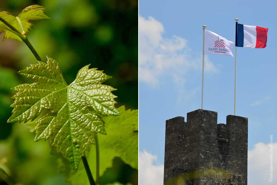 Grape Leaf and King's Tower Saint Emilion Bordeaux