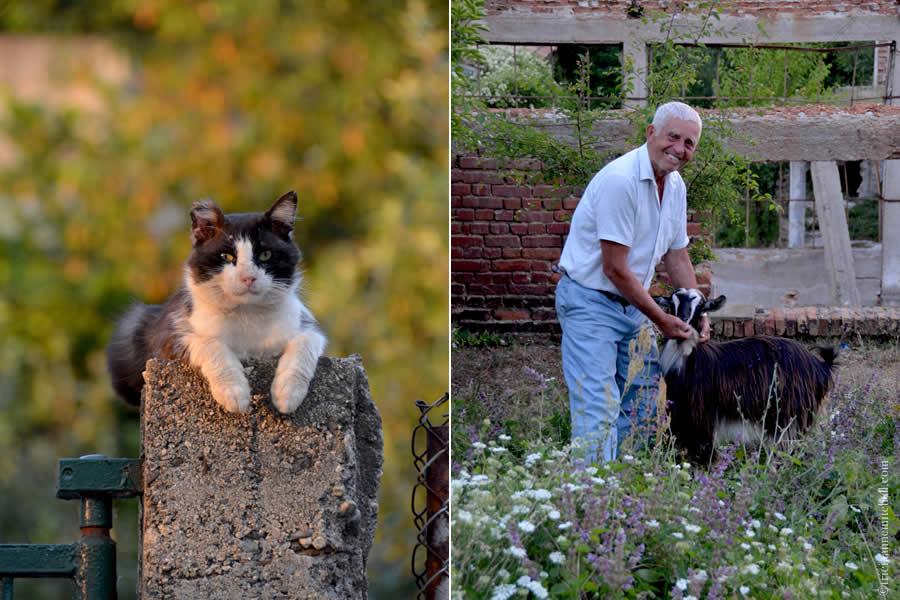 Kalofer Bulgaria Cat and Goat