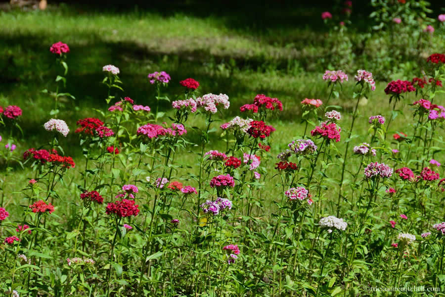 Subotica Serbia Flowers