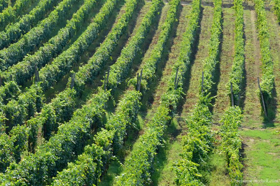 Erede di Chiappone Armando Vineyards Monferrato