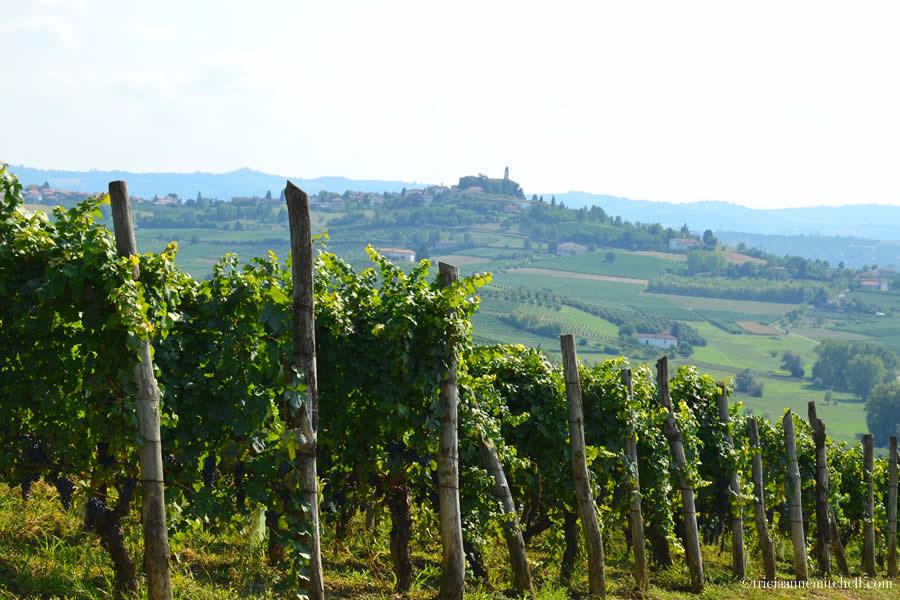 Monferrato Piemonte Wine Vineyards