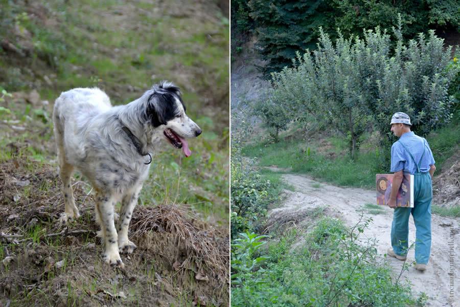 Tartafuia Dog and Truffle Hunter Piemonte