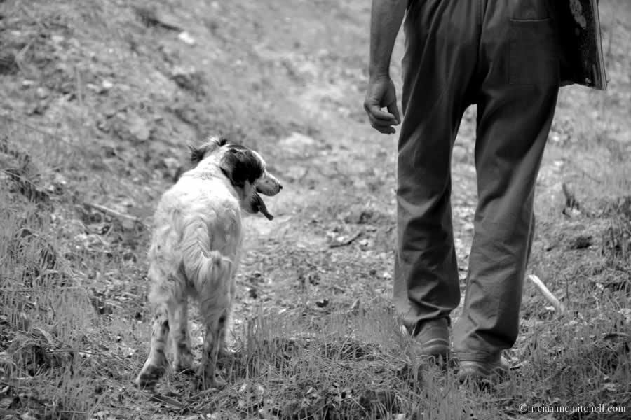 Truffle Hunter and Dog Piemonte