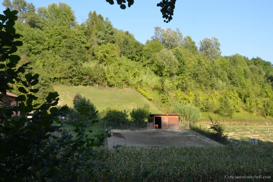 Truffle Hunting Grounds Piedmont Italy