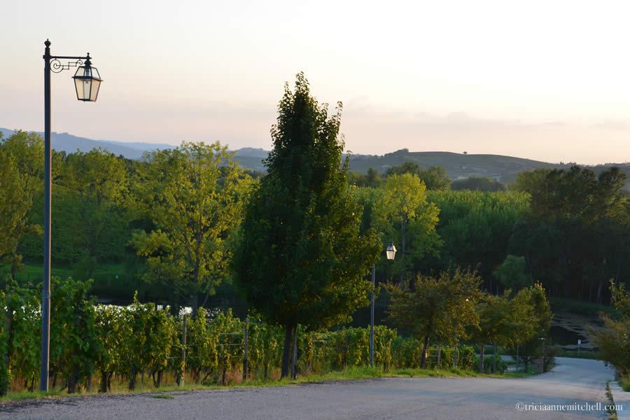 Agriturismo Italy Tenuta La Romana Monferrato