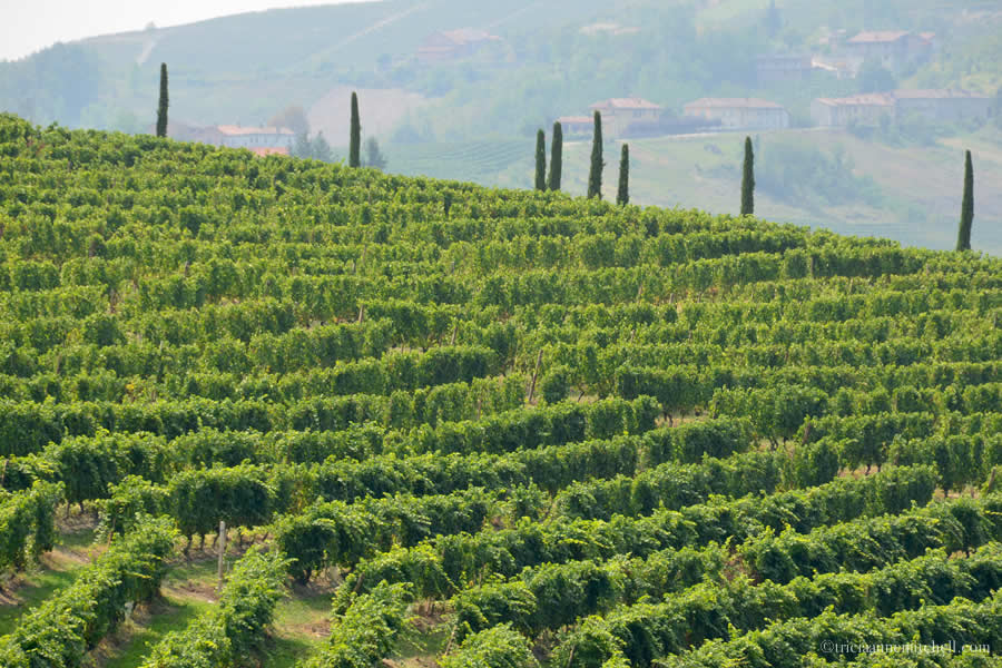 Barolo Vineyards Italy