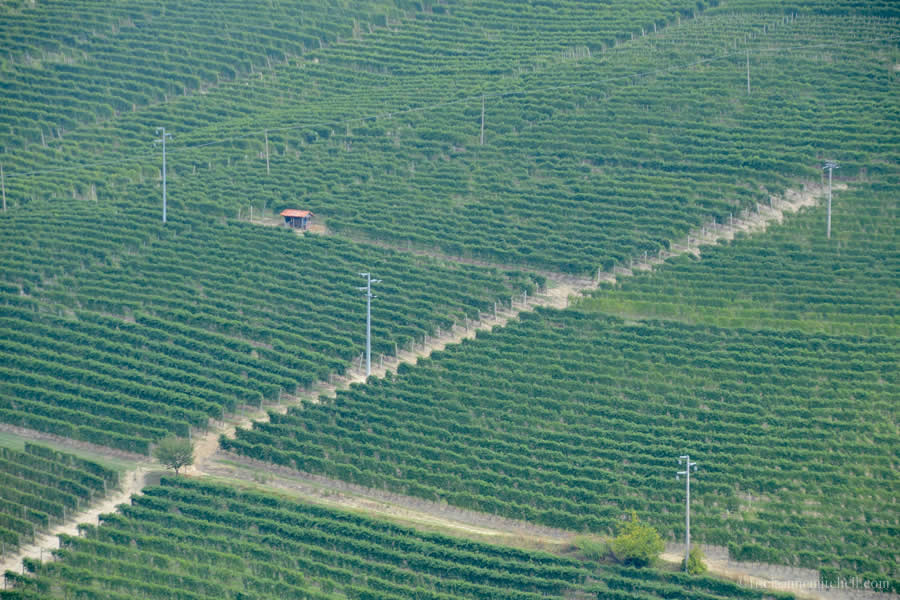 Piedmont Vineyards from Barbaresco Tower