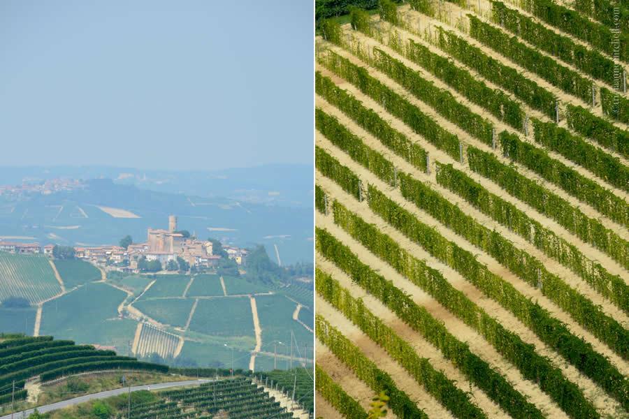 Piedmont Vineyards Italy