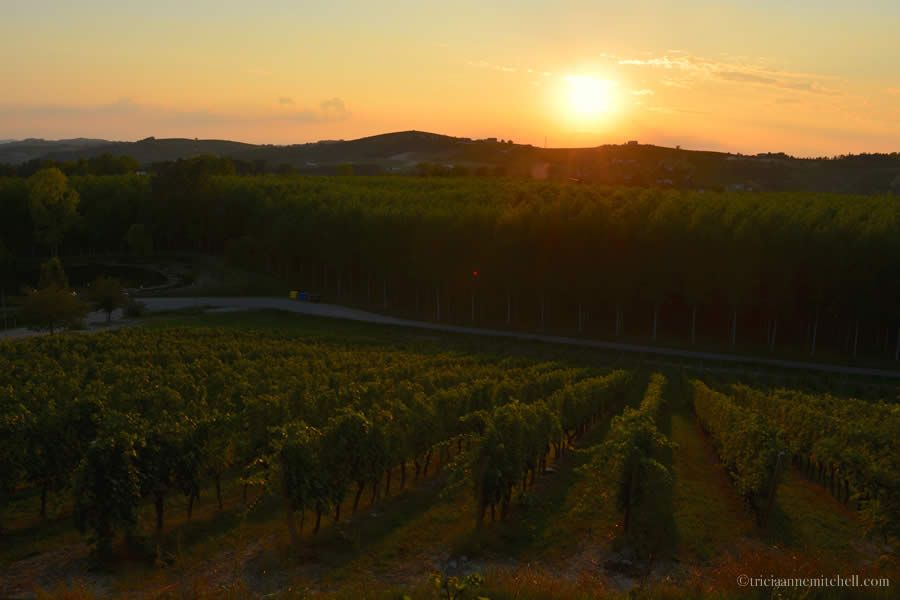 Piemonte Italy Vineyards Sunset