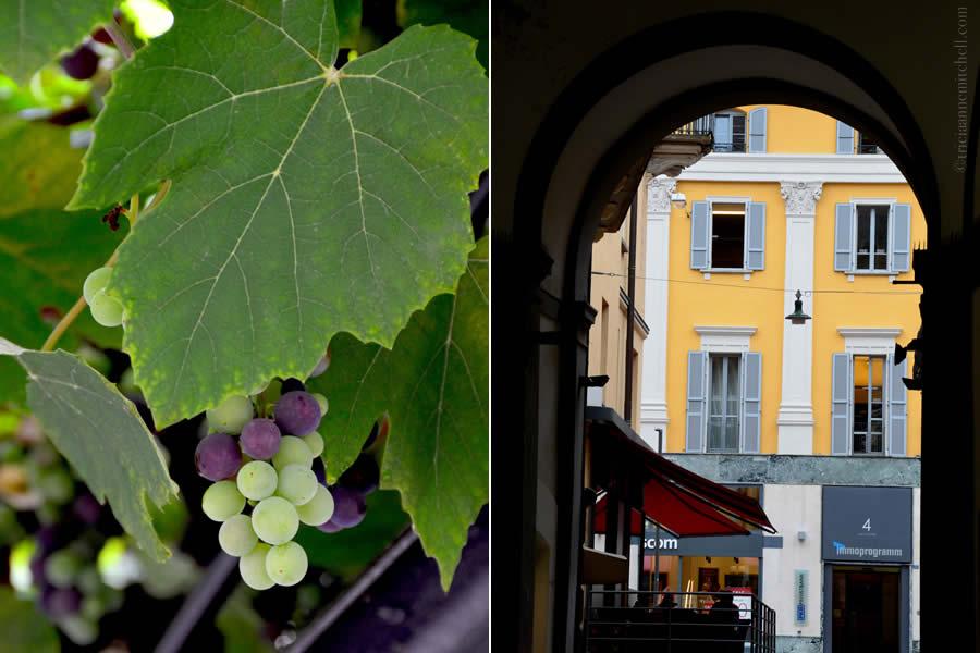 Bellinzona Vineyard Architecture Switzerland
