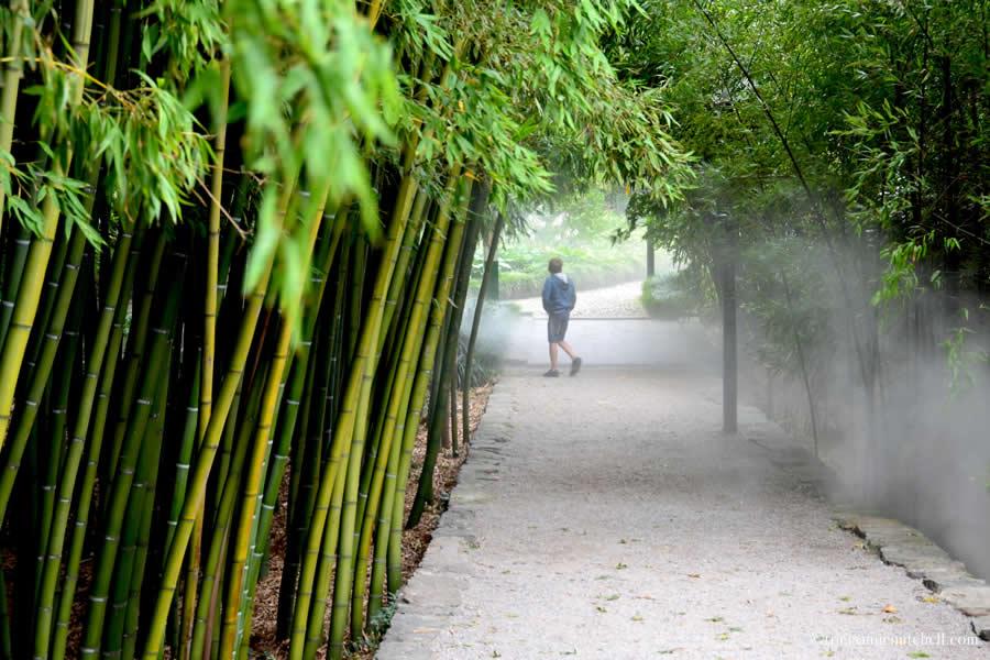 Brissago Islands Botanical Garden Bamboo