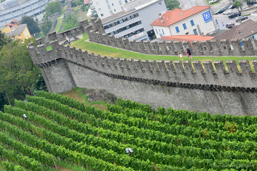 Castelgrande Bellinzona Vineyard