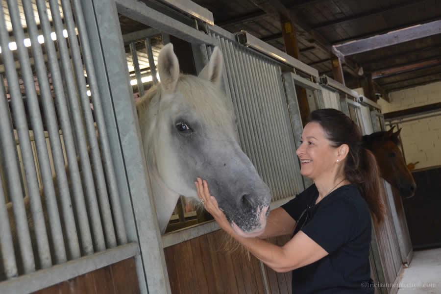 Horse Care Ticino