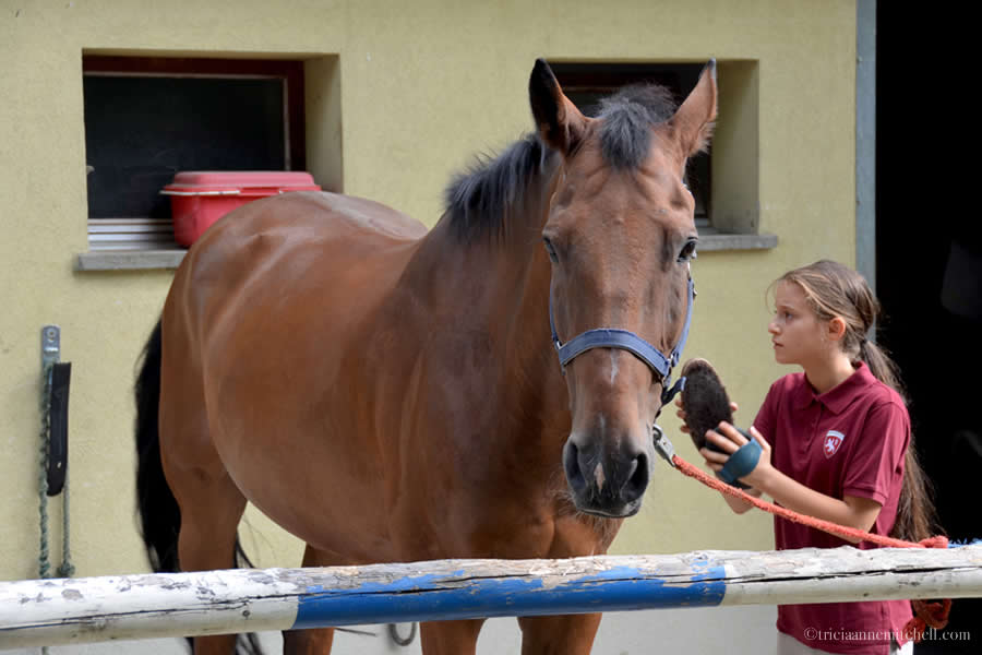 Horse Riding and Grooming Lesson
