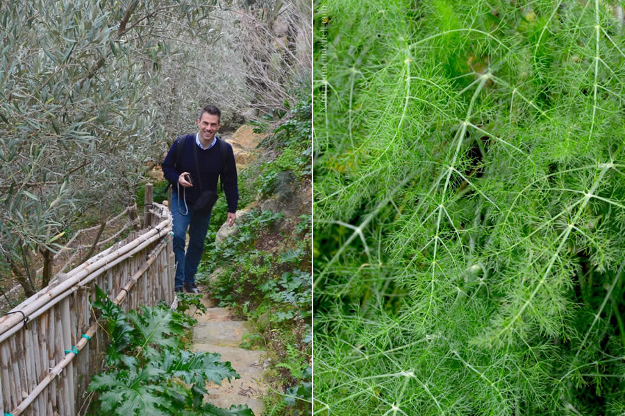 Malta Olives Fennel