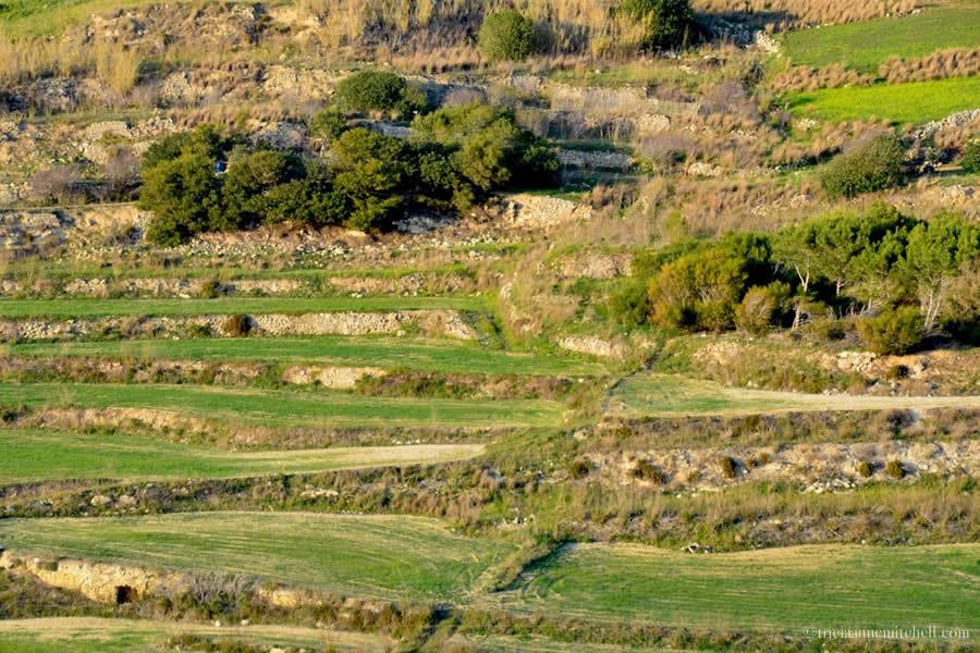 Znalezione obrazy dla zapytania maltese farms and countryside
