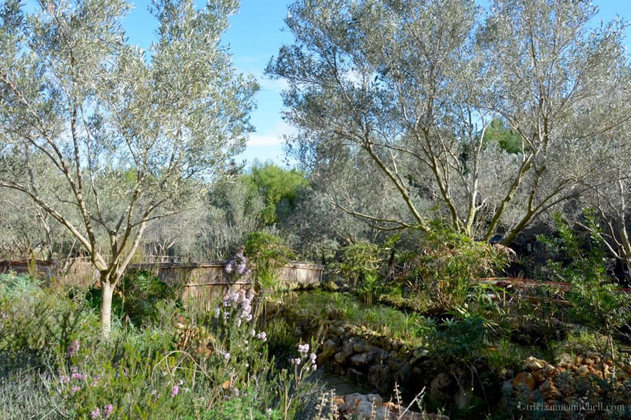 Maltese Olive Grove and Gardens