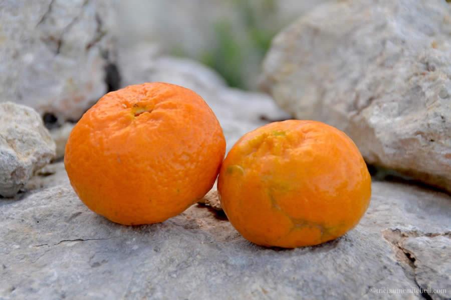 Maltese Tangerine