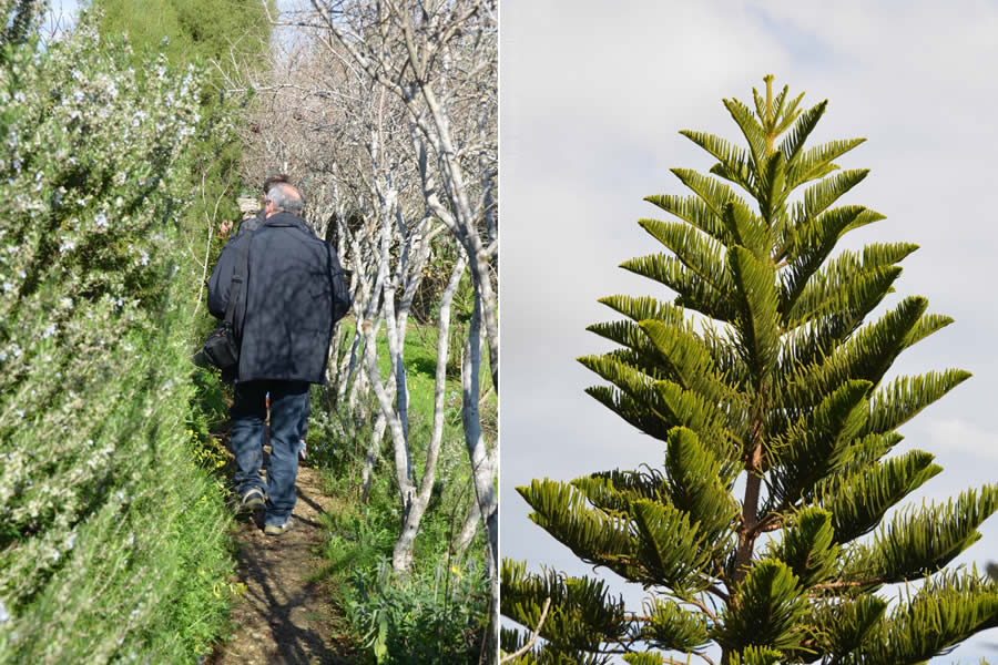 Tan-Nixxiegħa Olive Grove Merill Ecotour