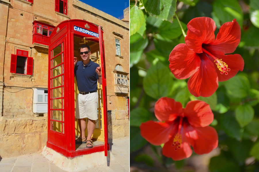 Malta British Phone Booth and Hibiscus Flowers