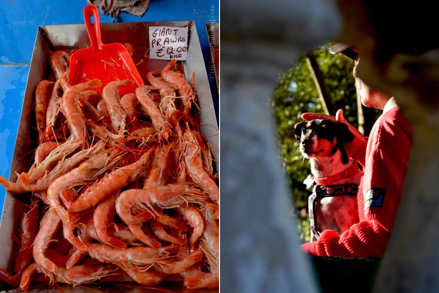 Marsaxlokk Fish Market Prawns Maltese Dogs