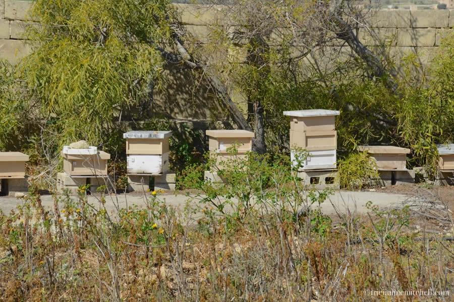 Malta Beehive Boxes