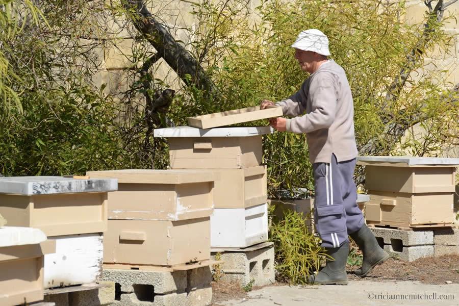 Malta Beekeeper Michael Muscat