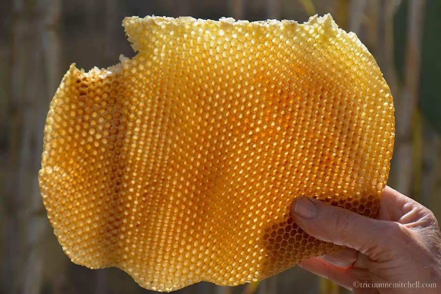 Malta Honeycomb Beekeeping