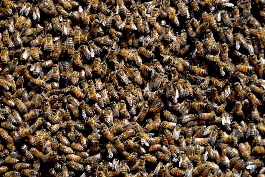 Maltese Bees Apiary