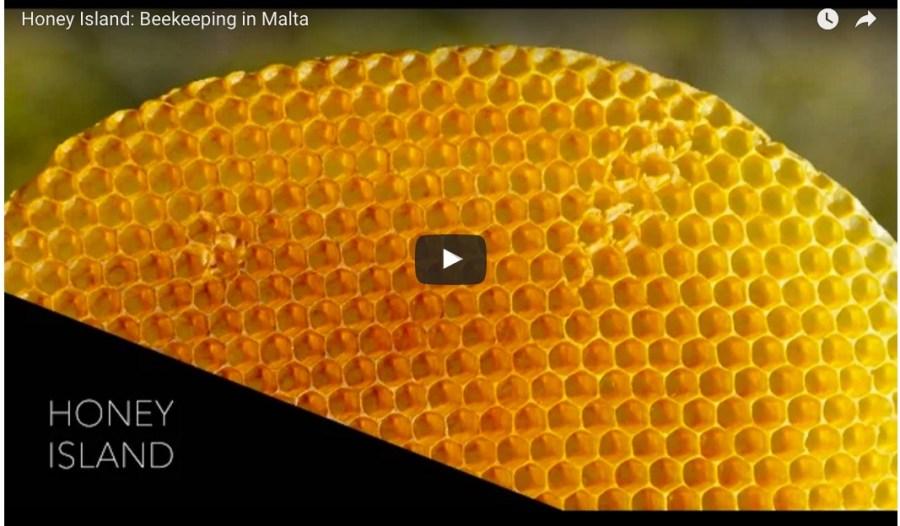Beekeeping in Malta