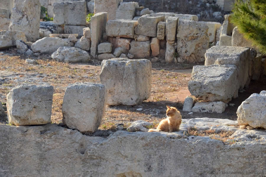 Domus Romana Roman ruins Rabat Mdina Malta