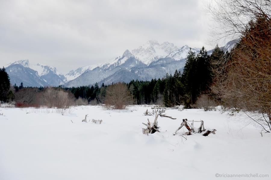 ammergauer-alpen-wild-deer-feeding-bavaria-wildtierfuetterung-graswangtal-bayern