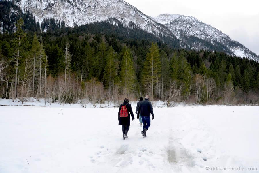 ammergauer-alps-wild-deer-feeding-bavaria-wildtierfuetterung-graswangtal-bayern