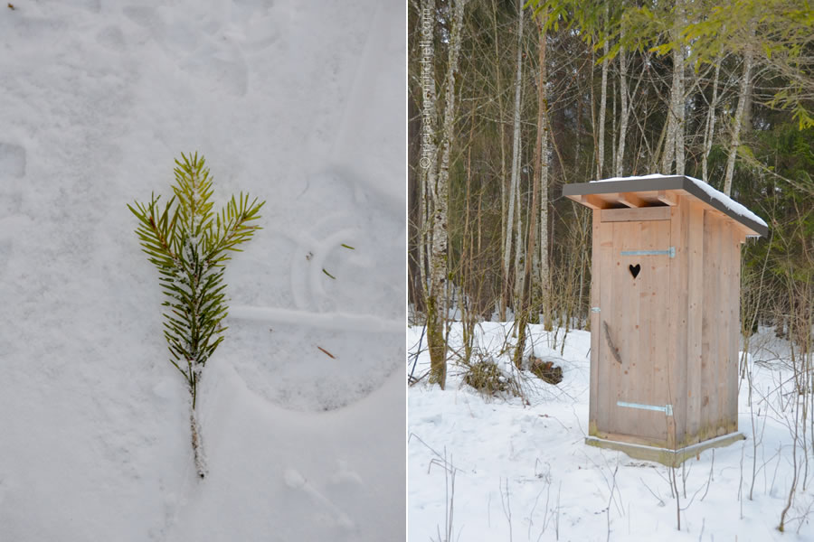 wild-animal-feeding-germany-walk-through-nature-outhouse-evergreen-branch