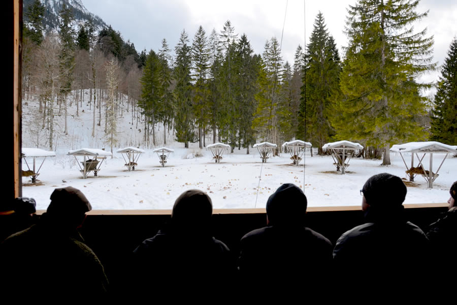 wild-deer-feeding-bavaria-wildtierfuetterung-graswangtal-bayern