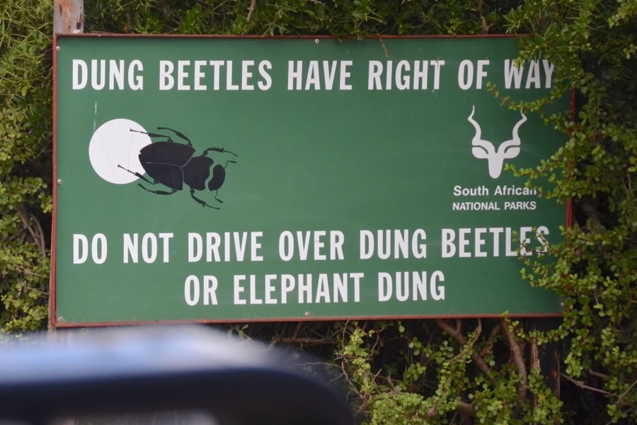 "A sign in Addo Elephant Park reads, ""dung beetles have right of way. Do not drive over dung beetles or elephant dung""."