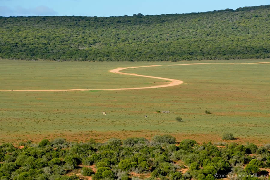 An S-shaped road winds through the Addo Elephant National Park.