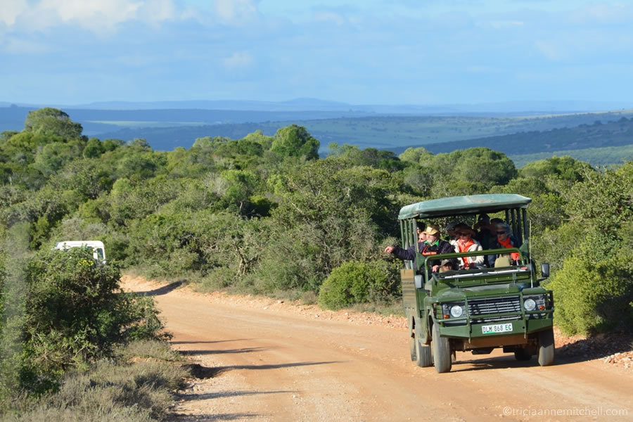 An open safari vehicle, with passengers inside, looks for animals in the bush at the Addo Elephant Park.