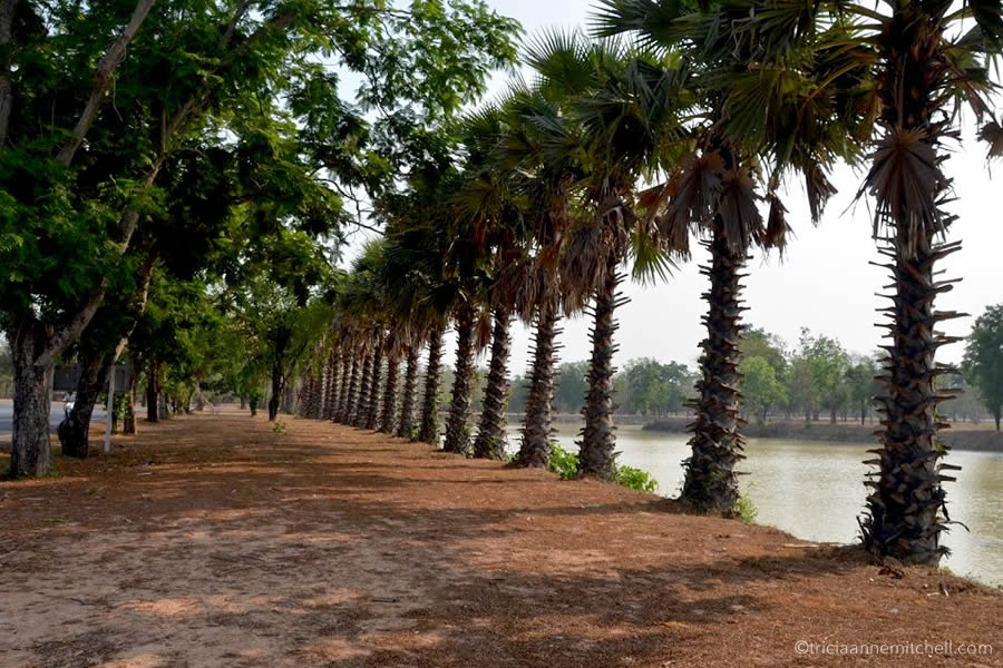 A palm tree lined walkway, adjacent to a moat, in Sukhothai Historic Park, Thailand.