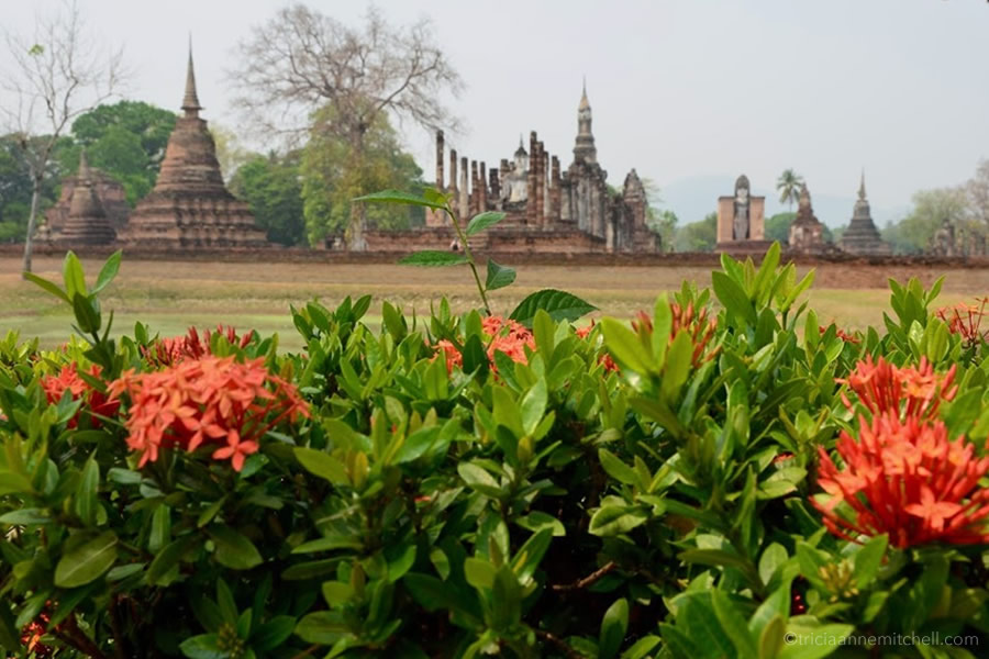 Orange blooms frame Wat Mahathat Temple in Sukhothai Historic Park.