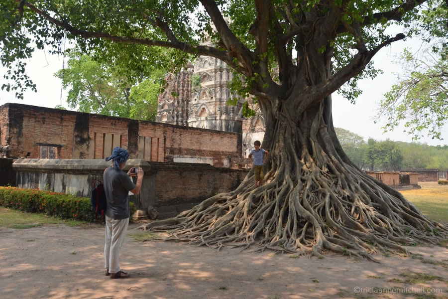 A boy climbs on a mass of entangled tree roots at Wat Si Sawai in Sukhothai's Historical Park in Thailand.