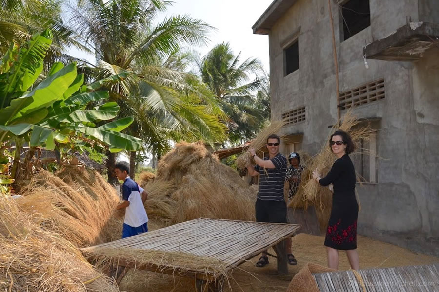 threshing rice in Cambodia