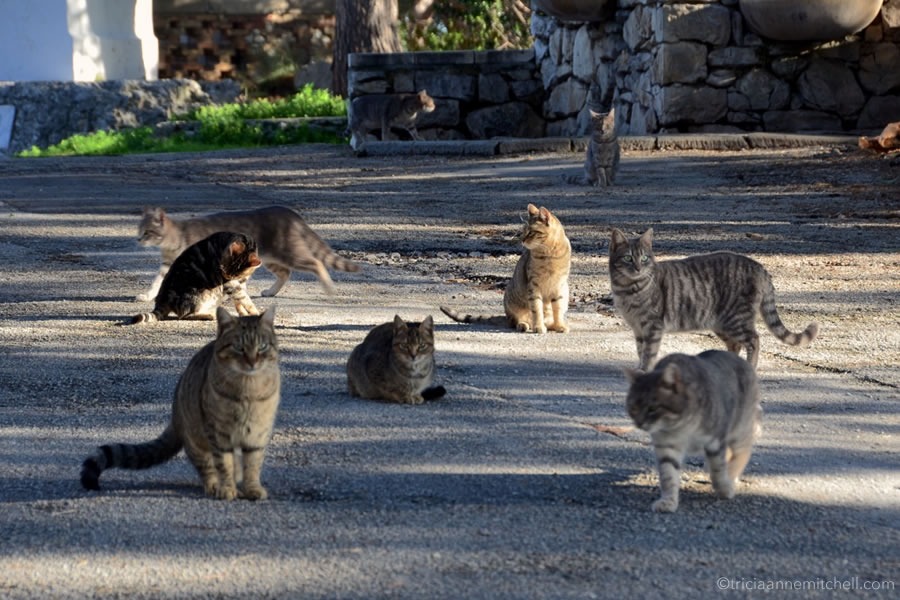 Stray cats await food Marjan Split Croatia