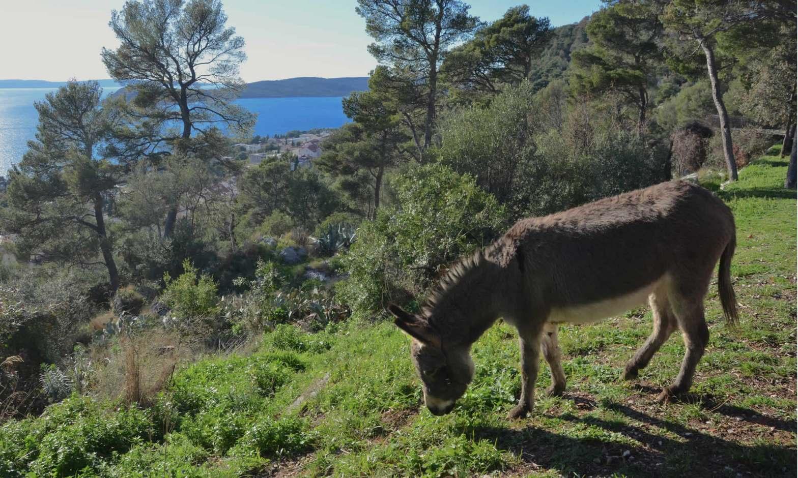 Donkey Marjan Split Croatia