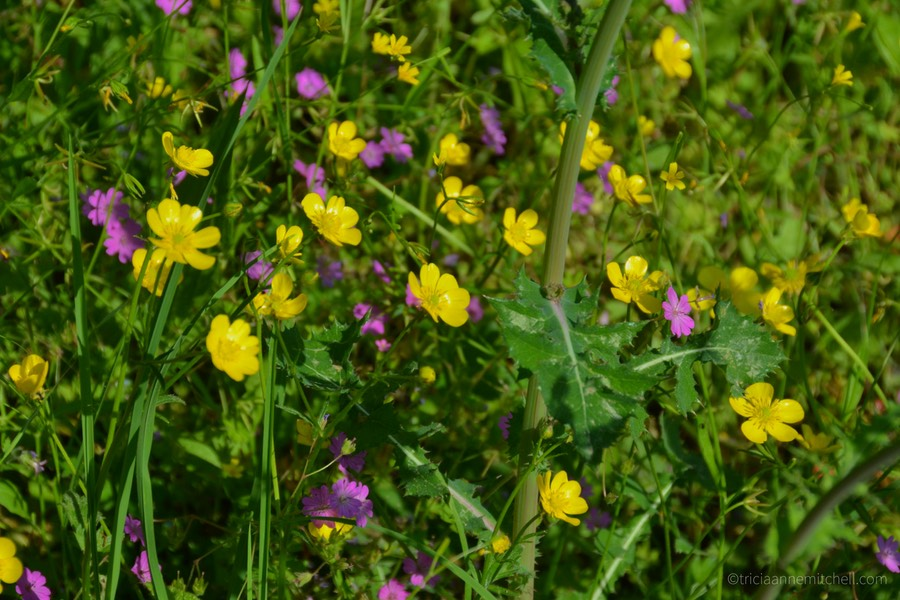 Purple and yellow wildflowers fill a greenspace at Lake Skadar National Park.